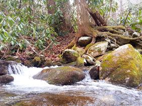 Corner Rock Creek mossy boulders tree roots Jens' pic